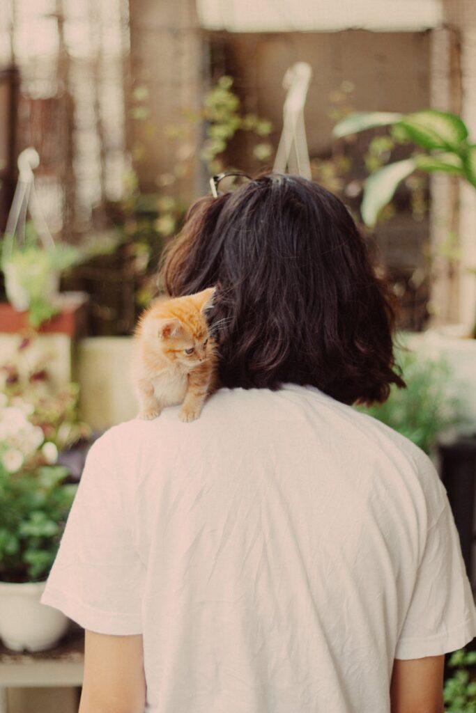 kitten sitting on person shoulder